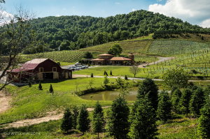 Linville Falls Winery, Newland, NC. Photo credit: J.W. Fulton